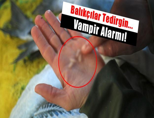 Balıkçılar Tedirgin... Vampir Alarmı!