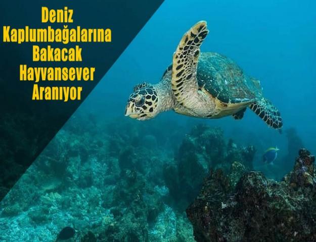 Deniz Kaplumbağalarına Bakacak Hayvansever Aranıyor