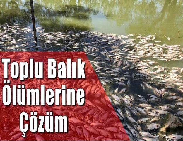 Toplu Balık Ölümlerine Çözüm