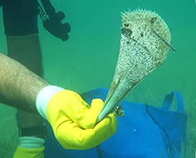 Deniz Canlıları Koruma Altında