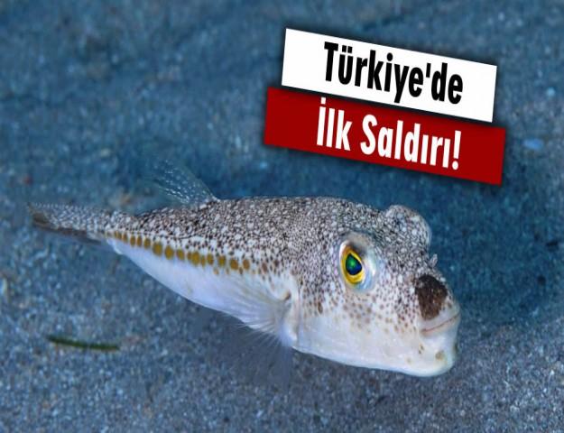 Türkiye'de İlk Saldırı!