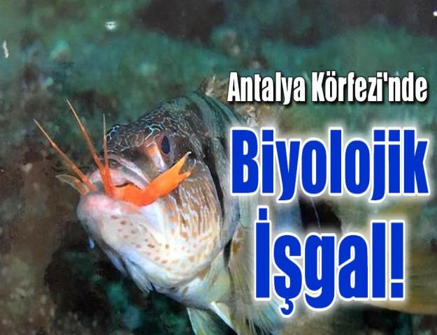 Antalya Körfezi'nde Biyolojik İşgal!