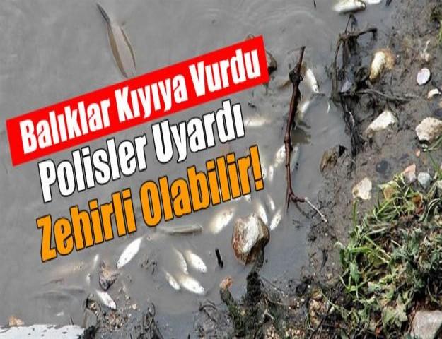 Balıklar kıyıya vurdu, Polisler uyardı: Zehirli olabilir!