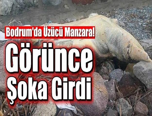 Bodrum'da Üzücü Manzara! Görünce Şoka Girdi