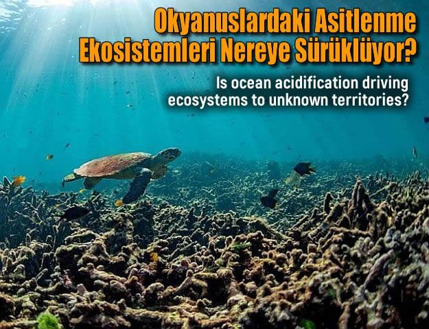 Okyanuslardaki Asitlenme, Ekosistemleri Nereye Sürüklüyor?