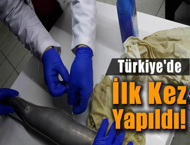 Türkiye'de İlk Kez Yapıldı!