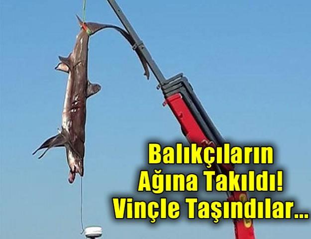 Balıkçıların Ağına Takıldı! Vinçle Taşındılar...