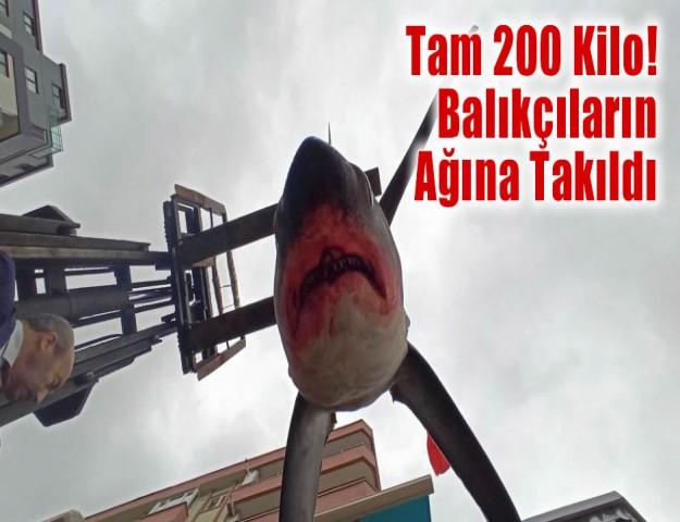 Tam 200 Kilo! Balıkçıların Ağına Takıldı