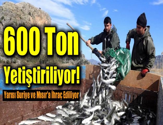 600 Ton Yetiştiriliyor! Yarısı Suriye ve Mısır'a İhraç Ediliyor