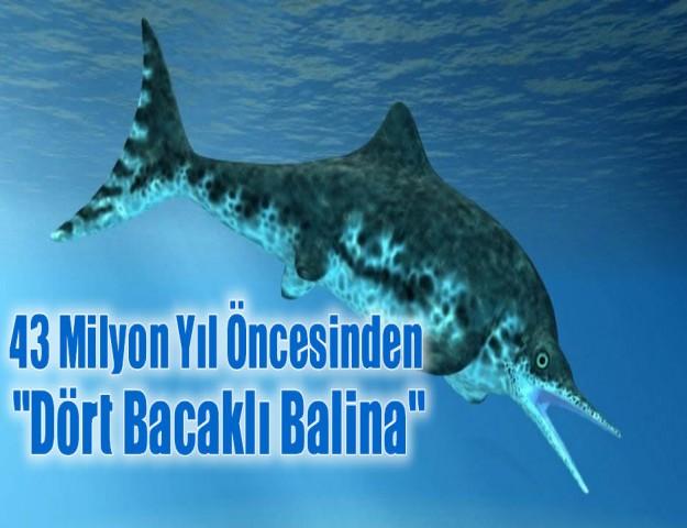 43 Milyon Yıl Öncesinden ''Dört Bacaklı Balina''