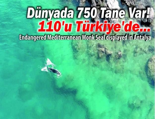 Dünyada 750 Tane Var! 110'u Türkiye'de...