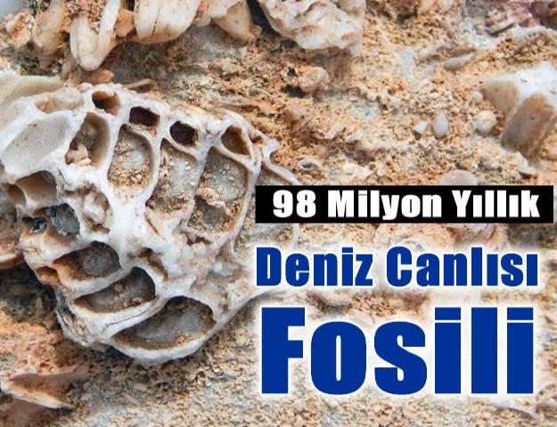 98 Milyon Yıllık Deniz Canlısı Fosili