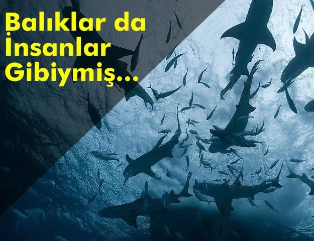Balıklar da İnsanlar Gibiymiş...