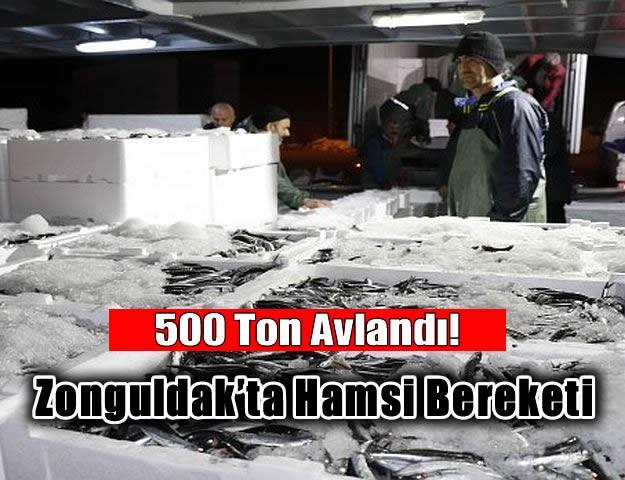 Zonguldak'ta hamsi bereketi 500 ton hamsi avlandı!