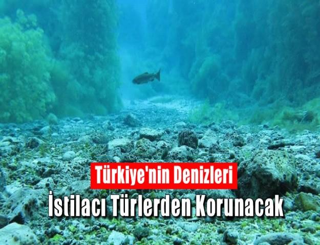 Türkiye'nin Denizleri İstilacı Türlerden Korunacak
