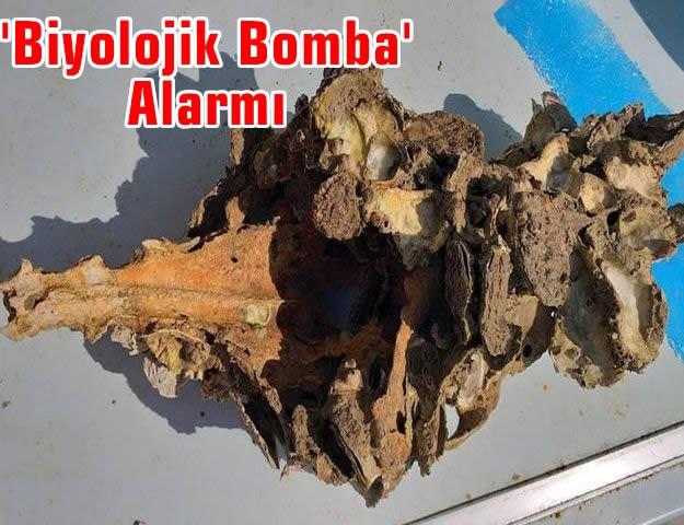 'Biyolojik Bomba' Alarmı