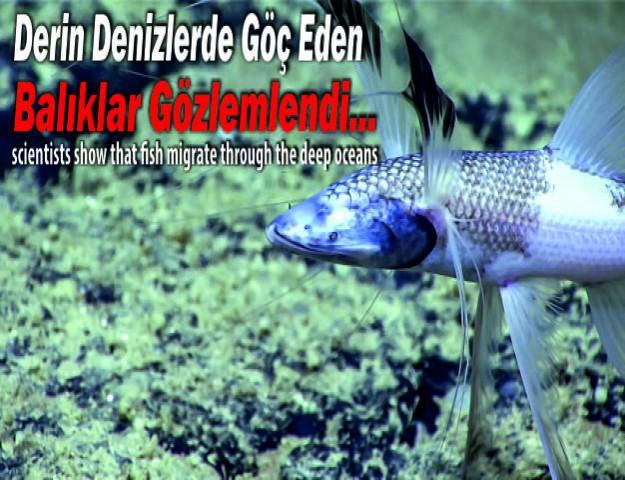 Derin Denizlerde Göç Eden Balıklar Gözlemlendi...