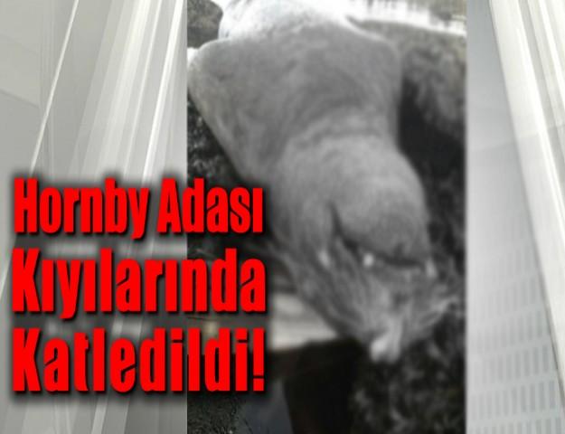 Hornby Adası Kıyılarında Katledildi!