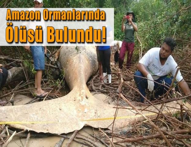 Amazon Ormanlarında  Ölüsü Bulundu