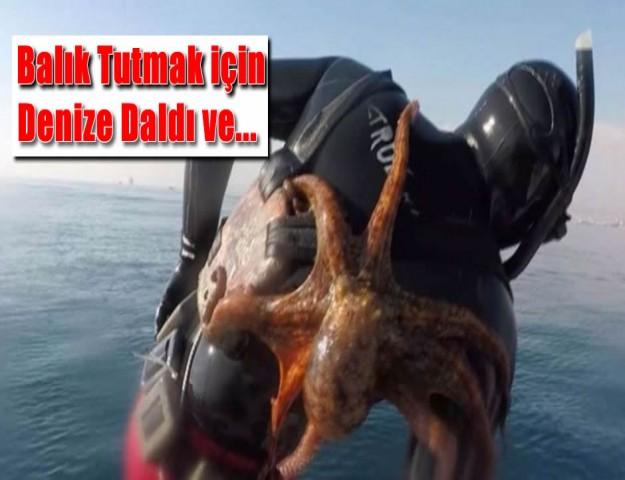 Balık Tutmak için Denize Daldı ve...