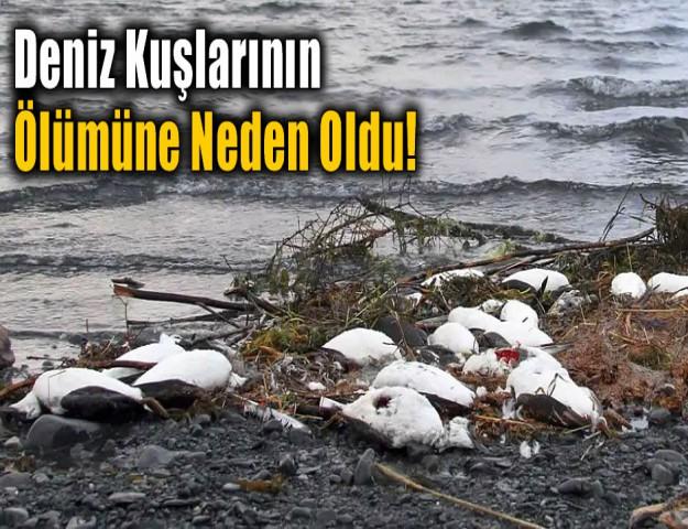 Deniz Kuşlarının Ölümüne Neden Oldu!
