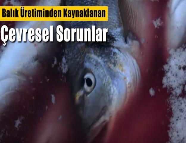 Balık Üretiminden Kaynaklanan Çevresel Sorunlar