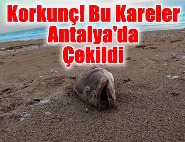 Korkunç! Bu Kareler Antalya'da Çekildi