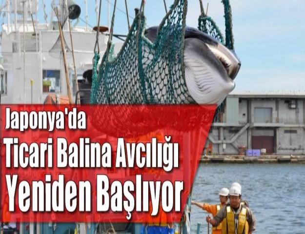 Japonya'daTicari Balina Avcılığı Yeniden Başlıyor