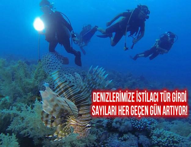 Denizlerimizi İstilacı Tür Girdi, Sayıları Her Geçen Gün Artıyor!