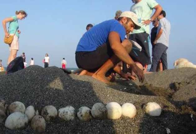 Yavru Caretta Carettaların Denize Yolculuğu Başladı
