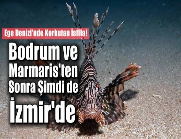 Ege Denizi'nde Korkutan İstila!