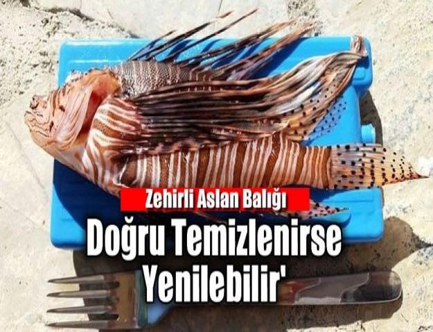 'Zehirli Aslan Balığı Doğru Temizlenirse Yenilebilir'