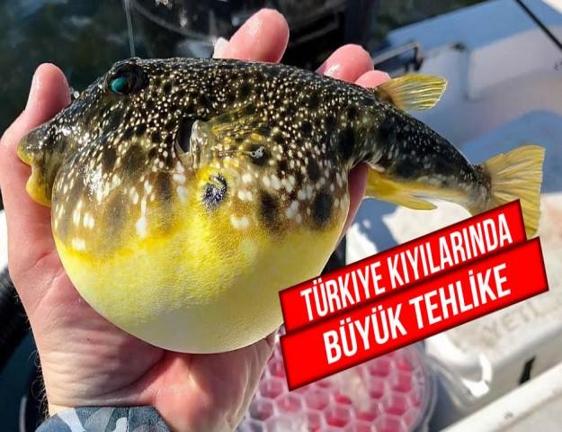 Türkiye Kıyılarında Büyük Tehlike