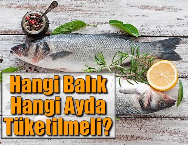Hangi Balık Hangi Ayda Tüketilmeli?