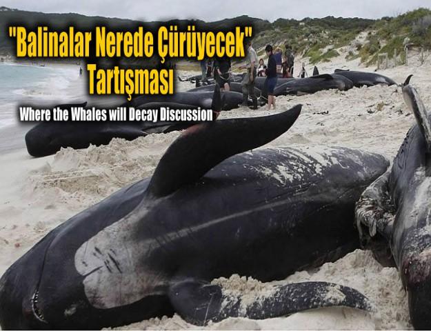 ''Balinalar Nerede Çürüyecek'' Tartışması