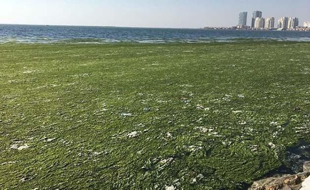 İzmir Körfezi'nde Şaşırtan Görüntü