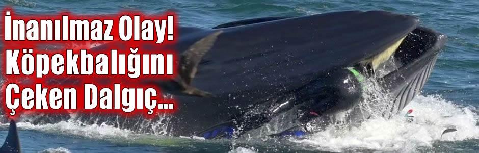 İnanılmaz Olay! Köpekbalığını Çeken Dalgıç...